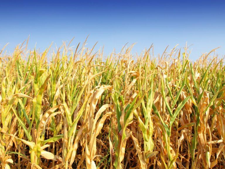 Resultado de imagem para Japan receives first shipment of ETBE from US corn-based ethanol