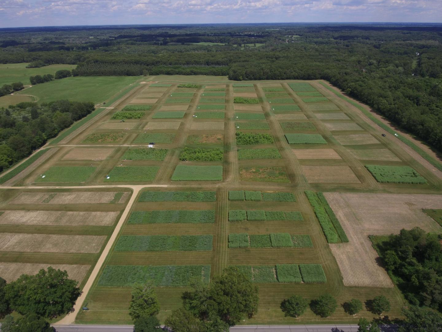 Biofuels cropping experiment in Michigan