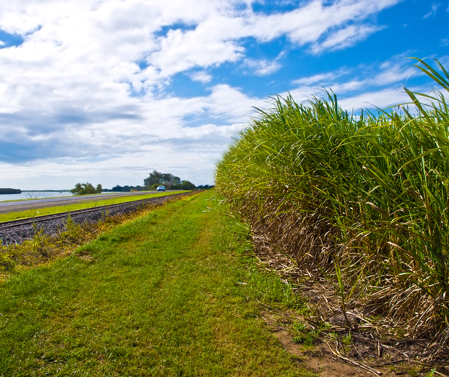 As ugar cane farm in Australia