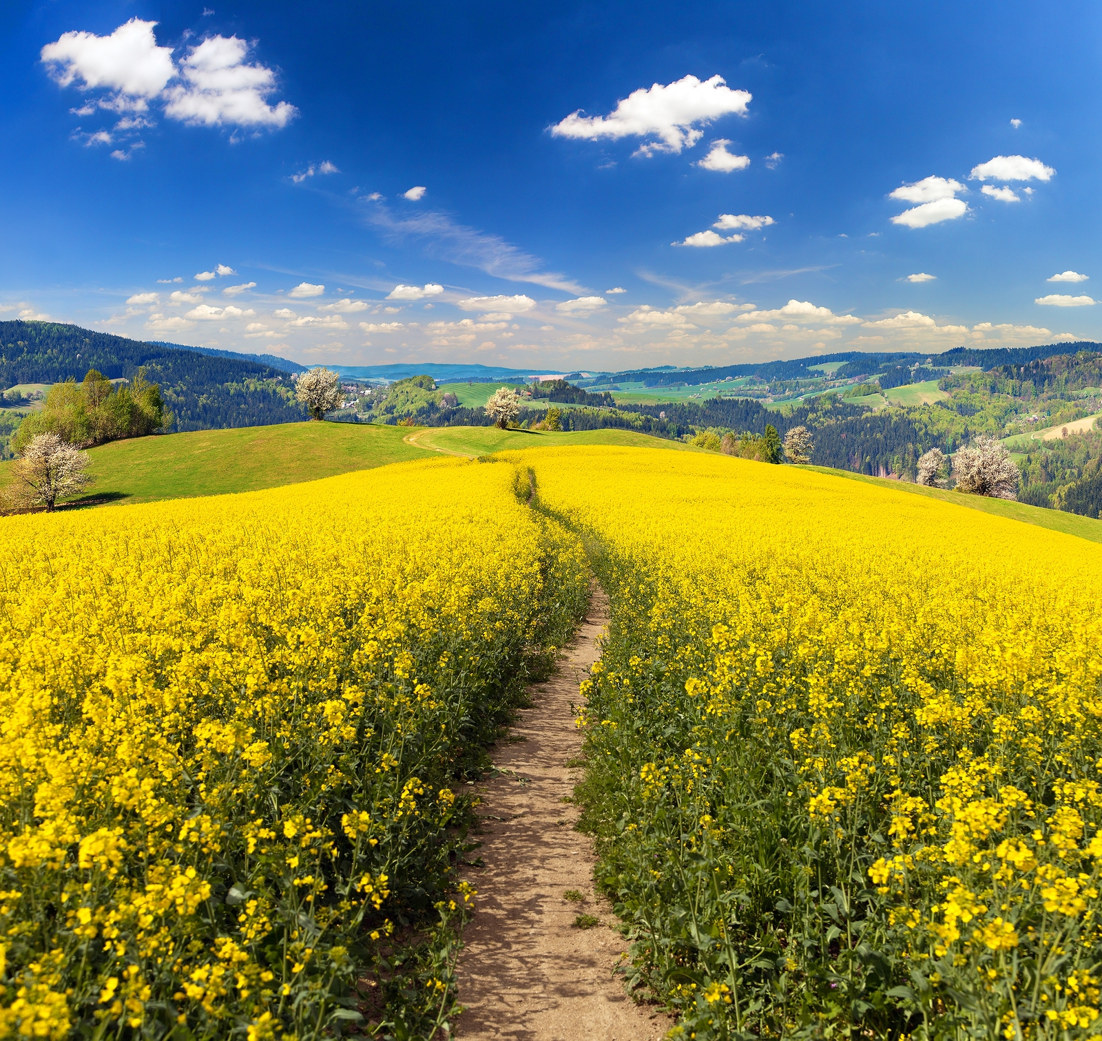 Rapeseed prices move up following coronavirus uncertainty