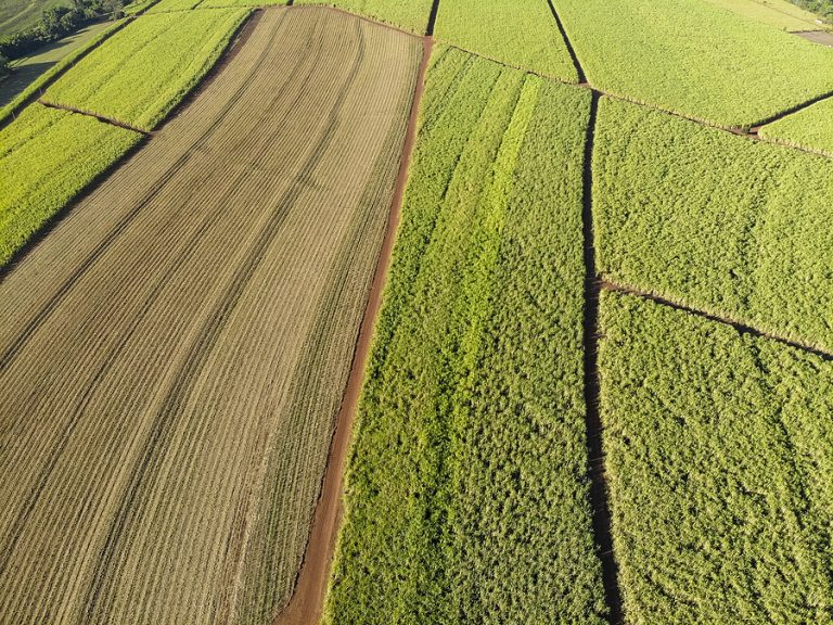 An aerial shot of a Brazilian sugarcane field