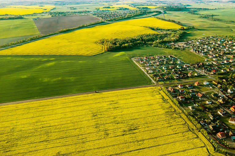 An aerial view of a rapeseed field