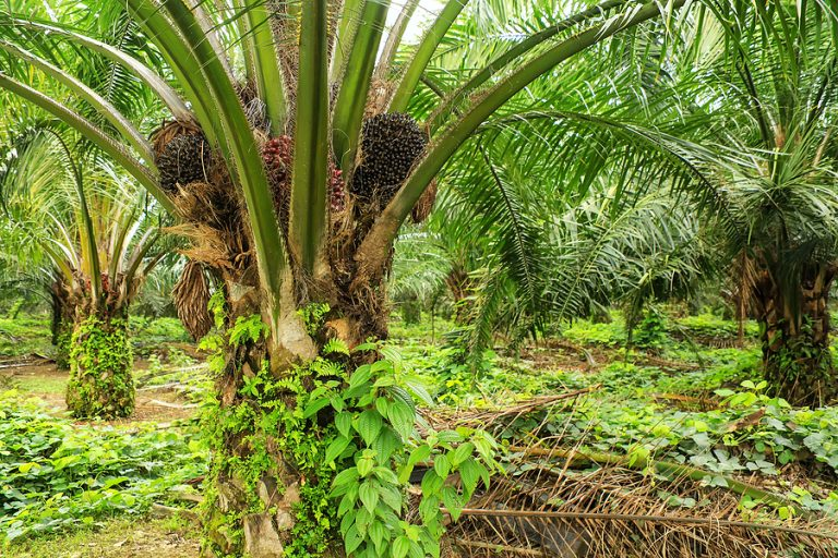 The move will boost the palm oil industry
