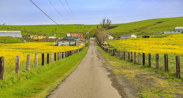 Rapeseed production is increasing