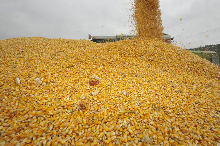 Corn harvested in the US