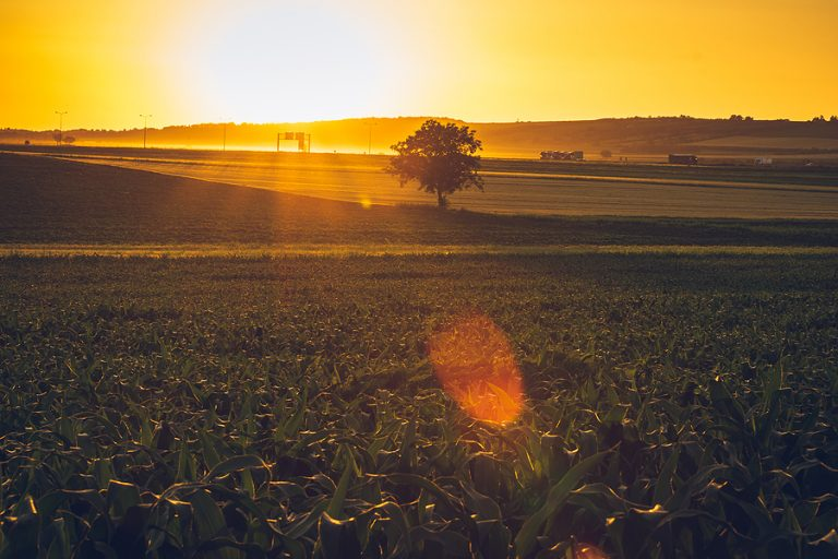 There was good news for biofuels producers