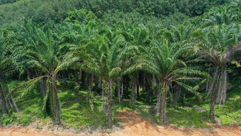 The palm oil market remains vulnerable