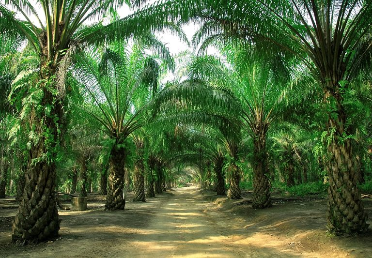 Malaysia and Indonesia are embroiled in a trade dispute with the EU over palm oil exports