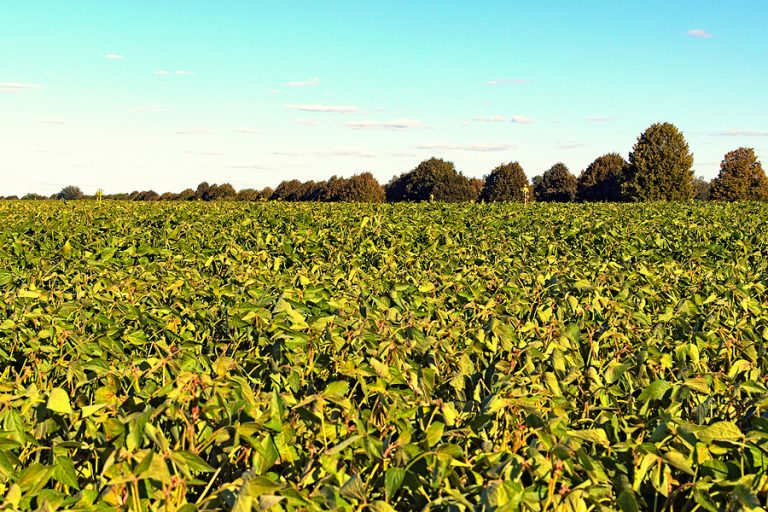 Prices of soybean prices have risen in the past few months