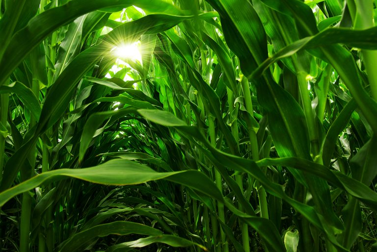More companies are switching to biofuel production