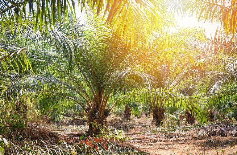 Palm oil will be the main feedstock