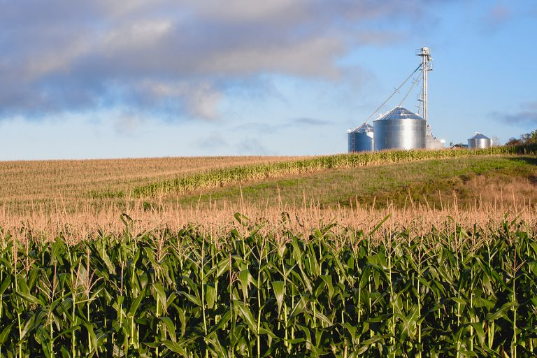 A corn field with a silo int he background