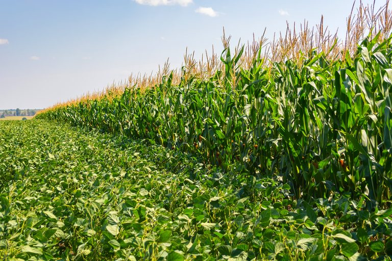 Soybean prices have risen steadily