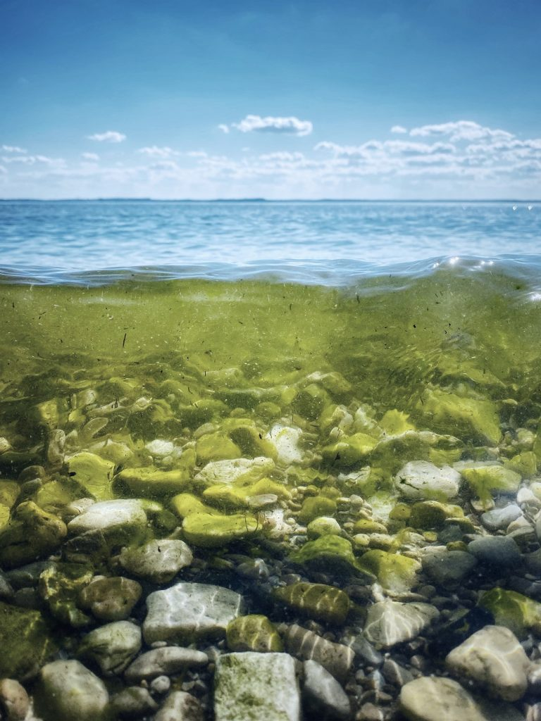 The algae industry is in its infancy